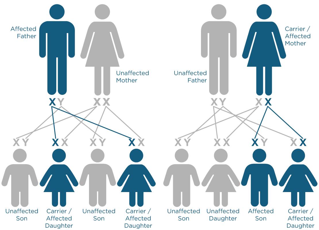 x-linked-inheritance